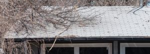 tree branches on roof