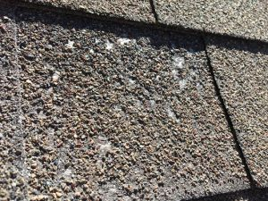 aged asphalt shingle roof with hail damage